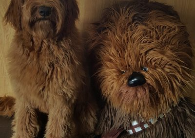 Riley-and-Chewbacca